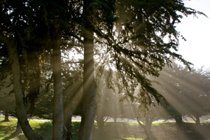 God-Light in the Cypress